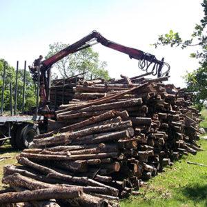 chêne bois chauffage legé